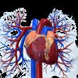 Ferihegyi úti szakrendelő - Kardiológia