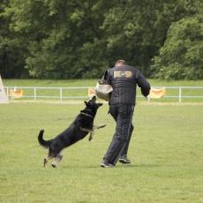 Excellent Dog Training Center